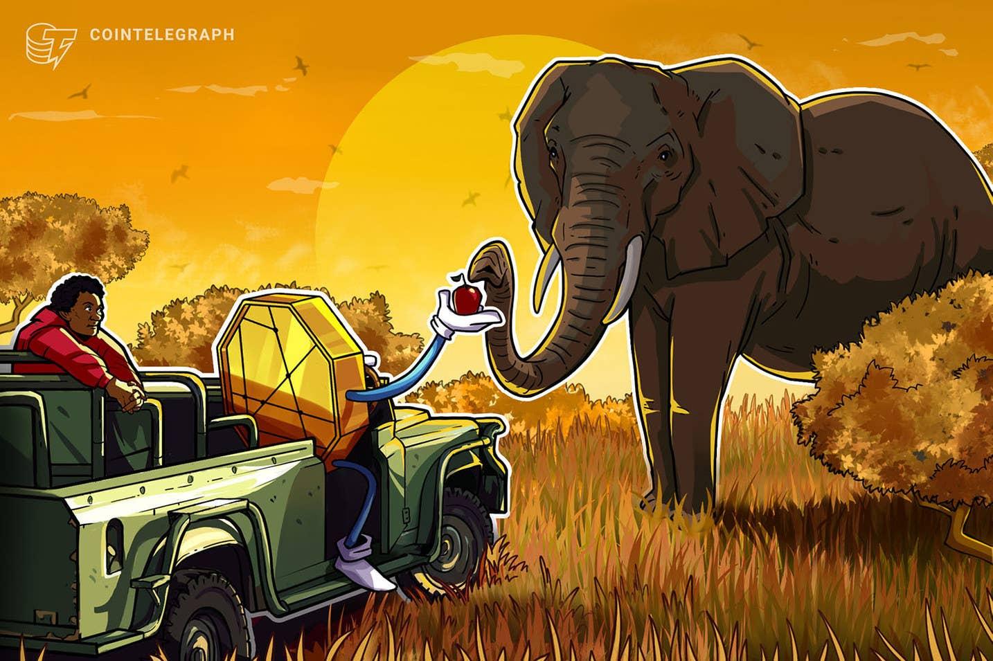Nuo 1,200 m. Afrikos kriptovaliutų rinka išaugo daugiau nei 2020%: Chainalysis